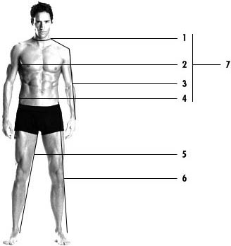 According to a SizeUSA survey of over 10, people, the average chest size of an American man is 42 inches. This is up 2 inches from the inch average found in a similar study conducted by the U.S. Department of Agriculture in